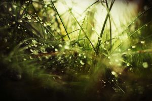 Dew by olgsss