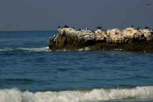Bird Rock by pinknfuzzy4711