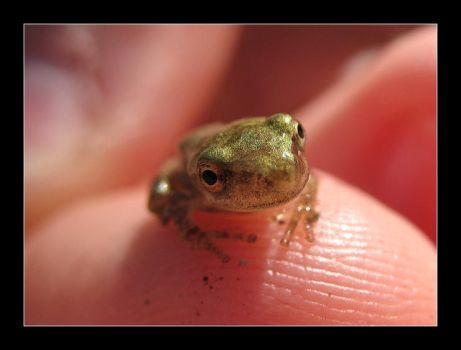 Frog 2 by MichelleMarie