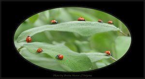 Ladybird on tour by brijome