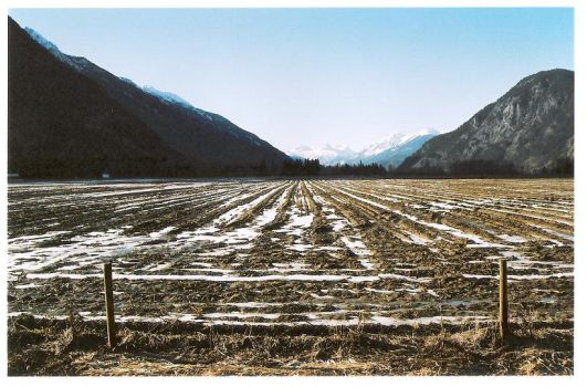 Fields and snow by rustedwings