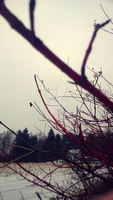 red branches. by JhoLc