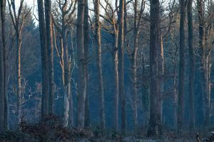 Foret13 by hubert61