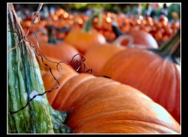 pumpkin patch by ecil