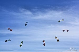 Bats in the sky by fatinhasphotography