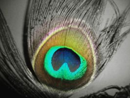 peacock feather by myth123123