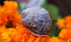 Snail travels 2 crop by para-vine