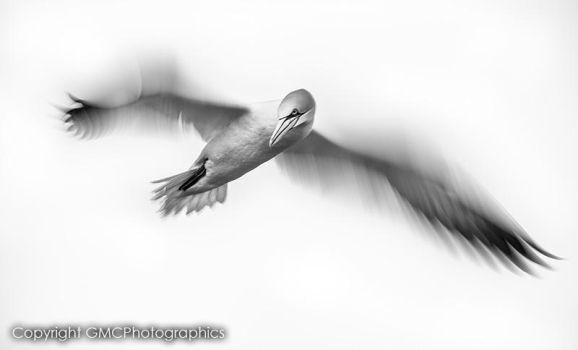 In Motion by GMCPhotographics