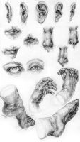 ears-mouths-noses-eyes-hands-feet by s-u-w-i