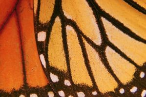 Butterfly scales by VintageWarmth