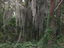 mossy tree with vine stock by adivawoman