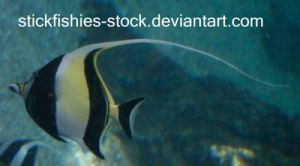Angelfish 2 by Stickfishies-Stock