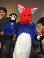 Blue/Red Wolf Furry at Hurricon 2015 by KrazyKari