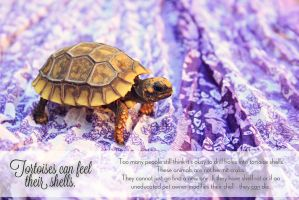 Shell Awareness by prominent-portraits