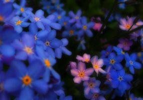 Forget me not by LaMusaTriste