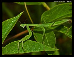 Green on Green - Mantis by boron