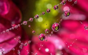 Cobweb dewdrop flower refraction by needcaffine