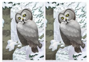 3D Great Grey Owl Crossview by WonderDookie