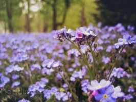Blue Violet by GuddiPoland