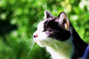Cat by Messastich
