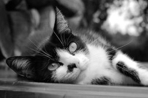 Black and White_Cat II by Rotschweif