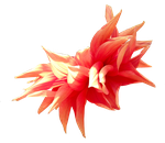 Fire Flower.. by Alz-Stock-and-Art