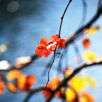 Red Leaves by incolor16