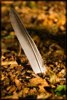 Feather by Intrepidity87