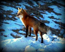 Foxed by mrthemanphoto