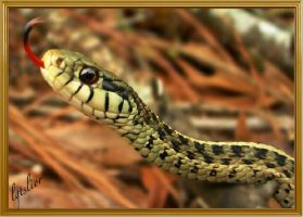 A Tongue Of Snake by Lior-Art