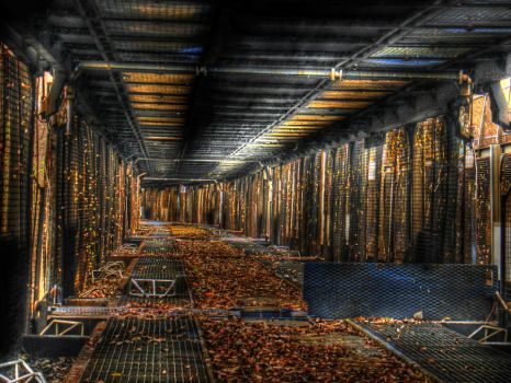 Cages by damagefilter