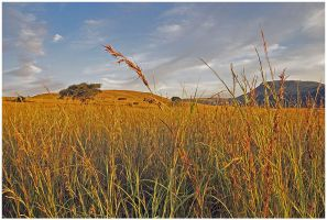 Fields of South Africa by PrometheanPenguin