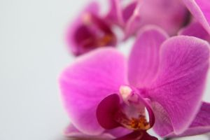 Orchids 3 by aislingg