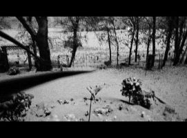 1st Snow 11-5-2013 by wiccanwitchiepoo