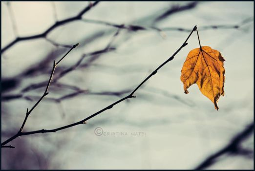 47. :Time to let go...: by bittersweetvenom