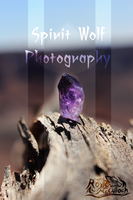 Spirit Wolf Photography by Royle-McCulloch