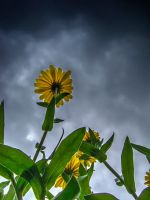 Storm Flower by Bazz-photography