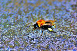 bomble bee hdr b by speed-demon