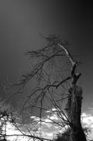 Gothic tree by Jon4H
