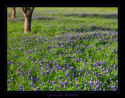 Legend of the Bluebonnet by WickedNox