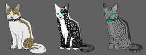 Warrior cats Adopts 1 CLOSED by AdoptableSky
