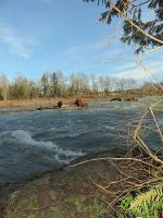 Vedder river south~1/26/2015~3 by Mathayis