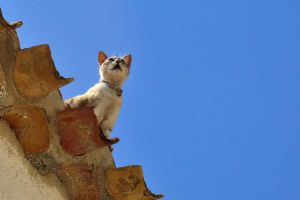 Cat on a hot (tin) roof... by cricketumpire