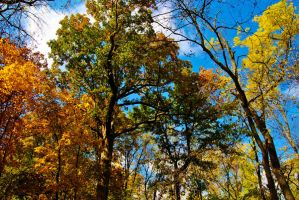Fall Colors by sweetz76
