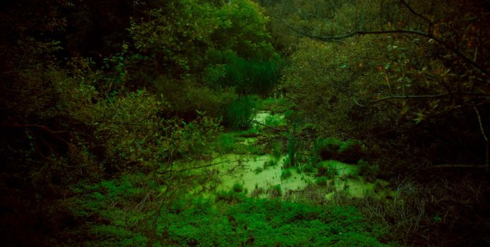 Swamp in the forest by Anna-Belash
