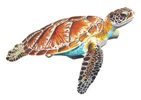 Turtle by Dessins-Fantastiques