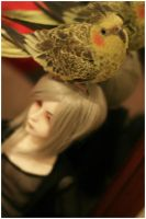 Birds land on dolls by hiritai