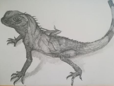 Asian water dragon (A3/graphite)  by Andrix9743
