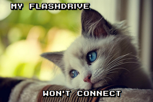 World Problems Cat- Flashdrives by Rthecreator