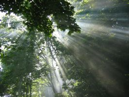 Sunrays through Maple trees by SuicidalSmile